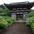 《関西花の寺25ヶ所巡り》【第4回(1・3・7番)】コスモス・シュウカイドウ・ハギ