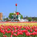 (^_^)笑顔咲く!彩(いろどり)の春の祭典(^_^)となみチューリップフェア2019&大迫力の立山・雪の大谷ウォーク1泊2日